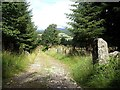 NO4797 : Old Firmounth Road  (track) down to Old Glen Tanar School/Church by Stanley Howe