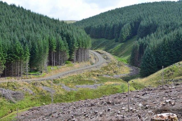 Forestry bordering the Glenrusco Burn