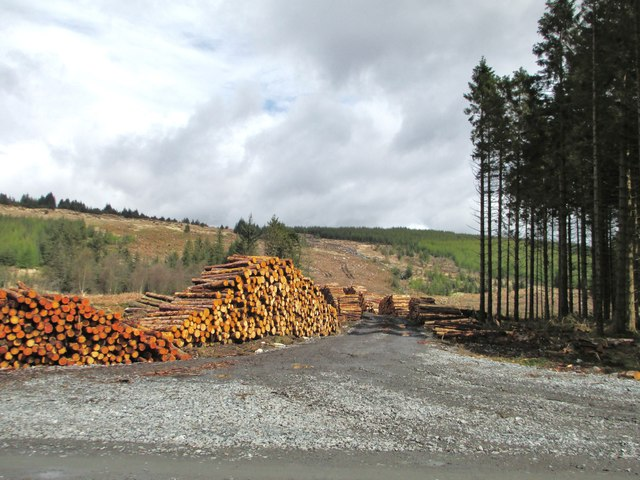 Newly cut logs and clear fell
