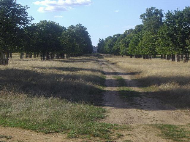 Avenue looking towards Hampton Court Palace