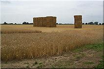 SE3982 : Partly harvested field near Sandhutton by Bill Boaden