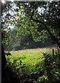 SS6520 : Meadow by Whitmore Lane by Derek Harper
