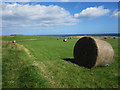 NU2424 : Footpath beside hay meadow, Low Newton-by-the-Sea by Graham Robson