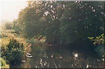 TG2105 : River Yare Eaton Common by David Leeming