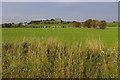 SD4360 : Grazing land, Heaton by Ian Taylor