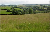 SS8928 : Meadow north of Lower Chilcott Wood by Derek Harper