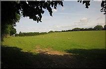 SS8827 : Sheep near Chiltons by Derek Harper