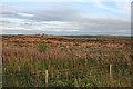 NS7868 : Near Whiterigg by Anne Burgess