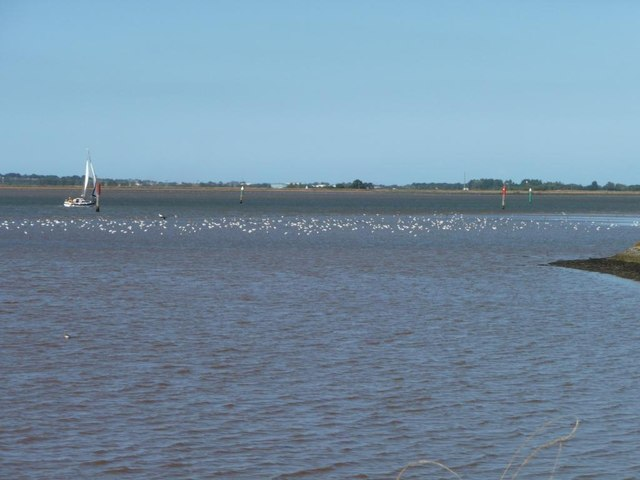 Wading birds, Breydon Water