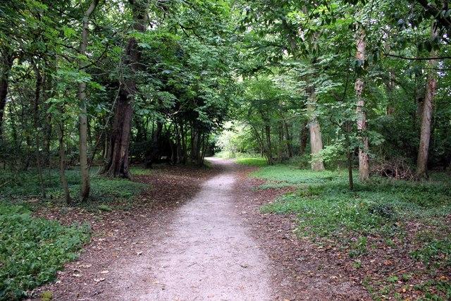 The Woodland at Bodelwyddan Castle