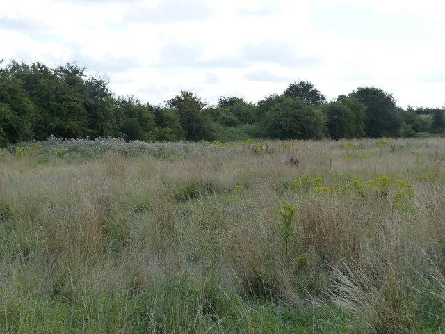 Waste ground and railway embankment