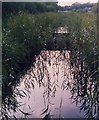 TG3316 : Experimental ponds in a ditch at Woodbastwick Marshes NNR by David Leeming