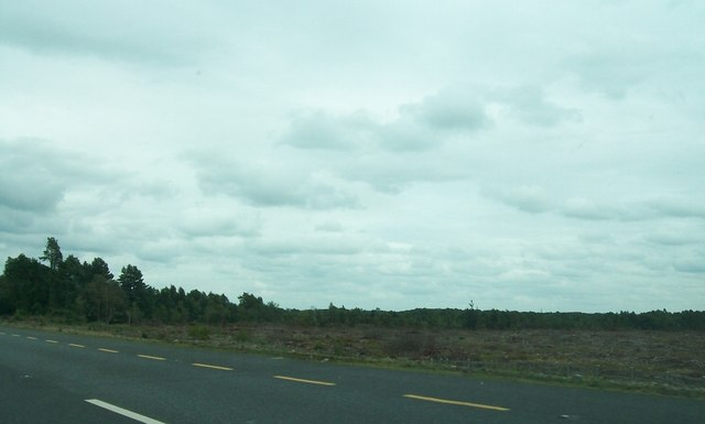 Cut-over forest south of the N52