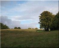 NS5859 : Scene in Linn Park by Alec MacKinnon