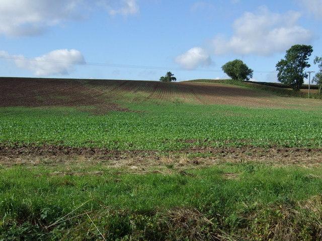Farmland east of Maplebeck