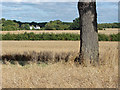 SU9549 : View across the fields by Alan Hunt