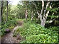 NU0801 : A forest trail, Cragside by Stanley Howe