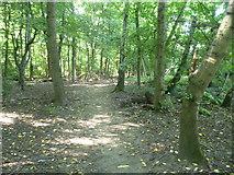 TQ1662 : Path into Sixty Acre Wood by Marathon
