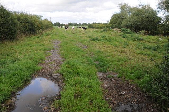 Cattle at Wettenhall Green