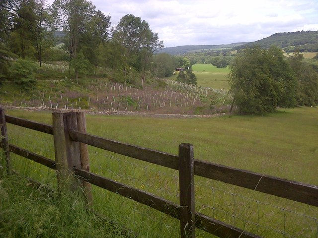 Newly Planted Holly Wood and the Derwent Valley