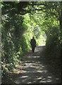 SX8755 : Greenway Walk approaching Galmpton Mill by Derek Harper