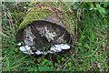 SO1860 : Fungi on Log near Water Break Its Neck Waterfall by Christine Matthews