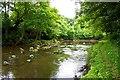 NZ7905 : River Esk, Near Egton Bridge by Paul Buckingham