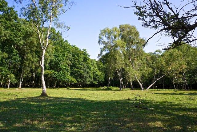 New Forest Glade, near Lyndhurst