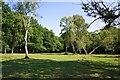 SU3006 : New Forest Glade, near Lyndhurst by Paul Buckingham