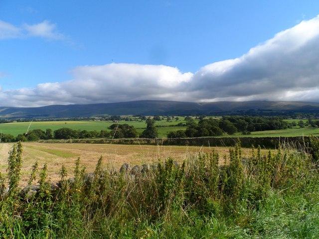 Near Newbiggin Moor