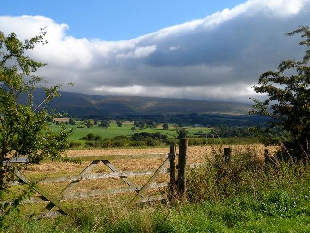Near Newbiggin Moor (2)