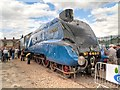 SK9135 : Mallard at Grantham by David Dixon