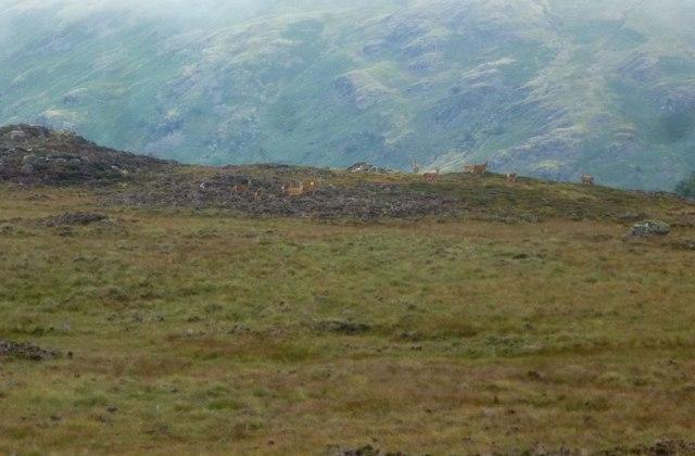 Red Deer, Armboth Fell