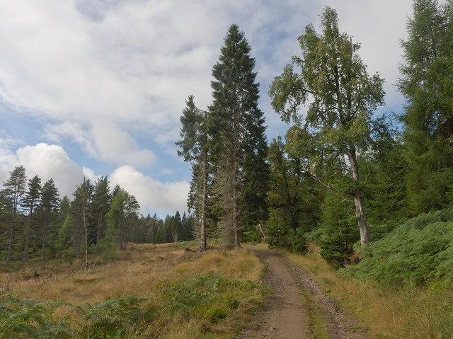 Start of forest track into the Novar Estate