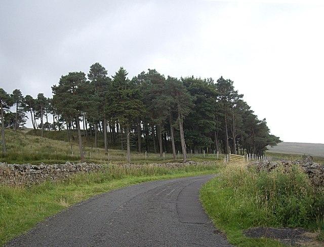Lintzgarth Plantation