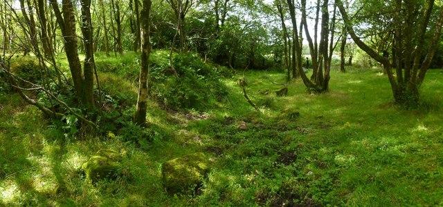 Woodland beside Carman Reservoir