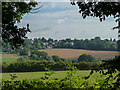 TQ3097 : Farmland in Vicarage Farm, Enfield by Christine Matthews