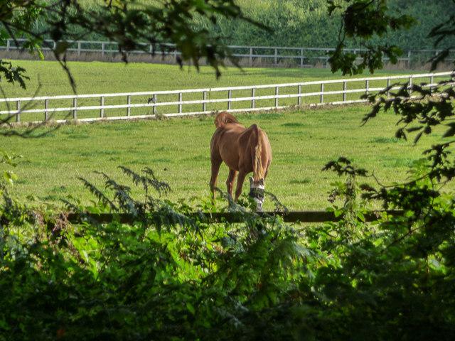 Farmland in Vicarage Farm, Enfield by Christine Matthews