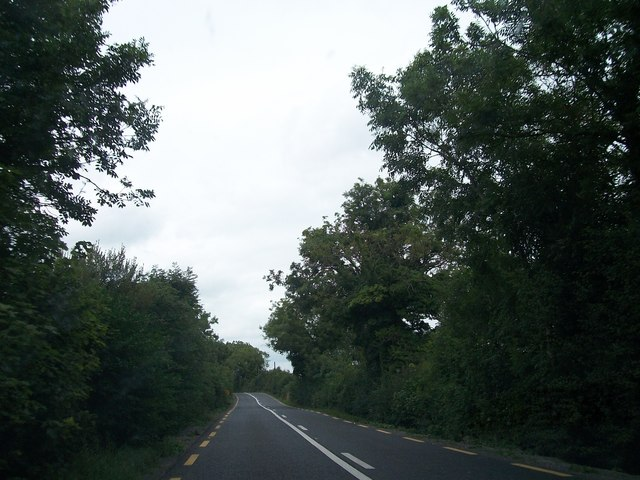 The tree lined N52 at Kilrush Lower