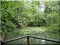 SO6112 : Small pond on the Beechenhurst Sculpture Trail by Christine Johnstone