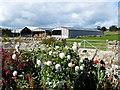NU1601 : Swarland Old Hall Farm by David Clark