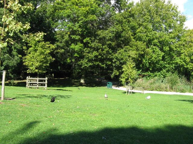 Rooks and Gulls in Hampden Park Eastbourne