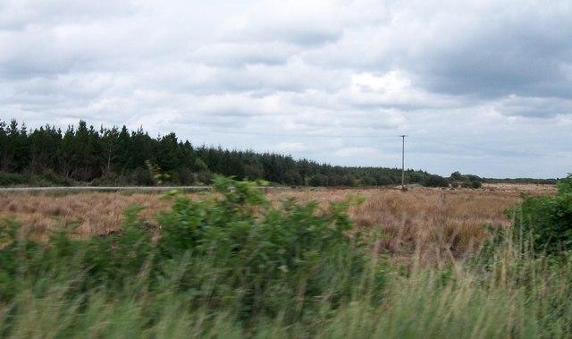 Forestry plantation on cut-over bogland