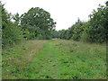 TQ7196 : Path through Crowsheath Community Woodland, Downham by Roger Jones