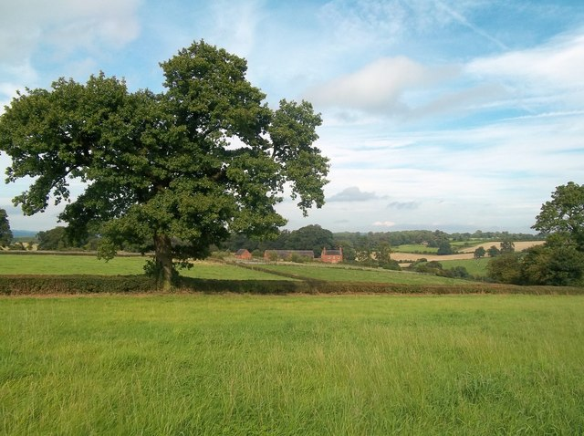 View Towards Thornyhill Farm