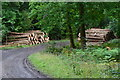 SU2429 : Timber stacks beside track in Bentley Wood by David Martin