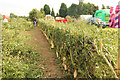 SK8260 : Hedge laying by Richard Croft