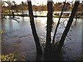 SP2965 : River Avon by Emscote Gardens, Warwick 2012, November 25, 08:41 by Robin Stott