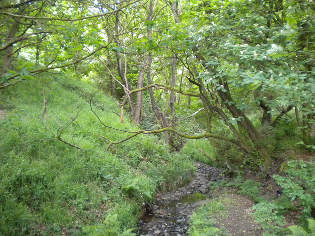 Stream in Springbank Wood