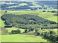 NS9799 : Lawhill Community Woodland by Richard Webb